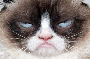 grumpy-cat
