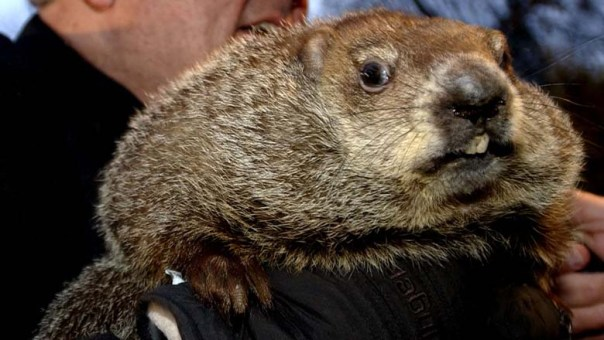 Punxsutawney Phil Makes Annual Groundhog Day Appearance